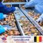 Praca na produkcji przy sortowaniu i pakowaniu cebuli - Belgia